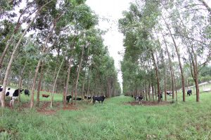 gado-floresta