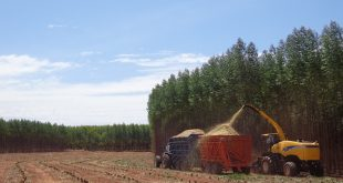 Colheita mecanizada de biomassa florestal em plantio de eucalipto