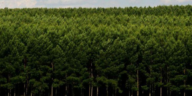 Tecnologia é aliada das empresas na simplificação da gestão florestal