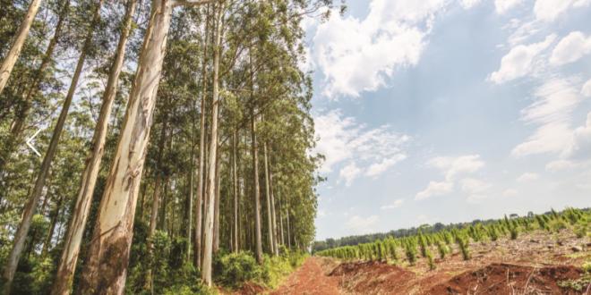 Bayer impulsiona produtividade de eucaliptos durante Expoforest 2018