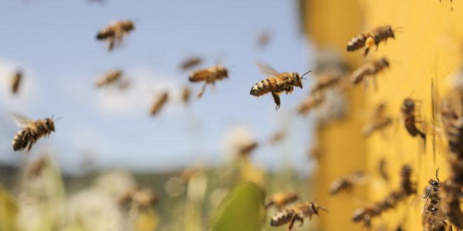 Bayer incentiva convivência saudável entre apicultura e florestas