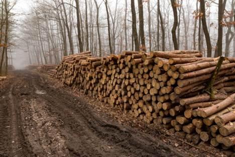 Colheita Florestal: muito além de derrubar árvores