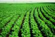 Bayer lança fungicida Fox® Xpro para safra de soja 19/20