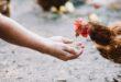 Como a nutrição de precisão pode contribuir na produção de carne de frango de qualidade