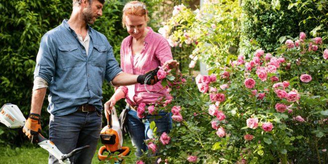 STIHL lança curso EAD inédito sobre jardinagem
